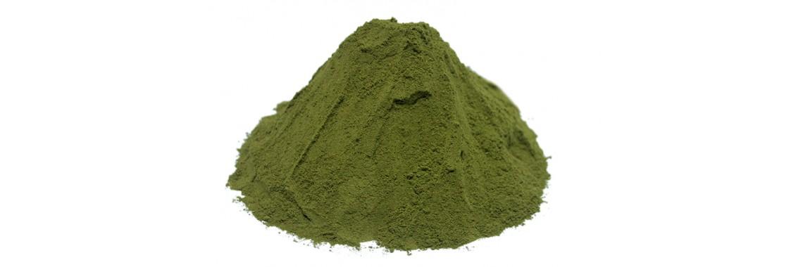 Coca tea powder